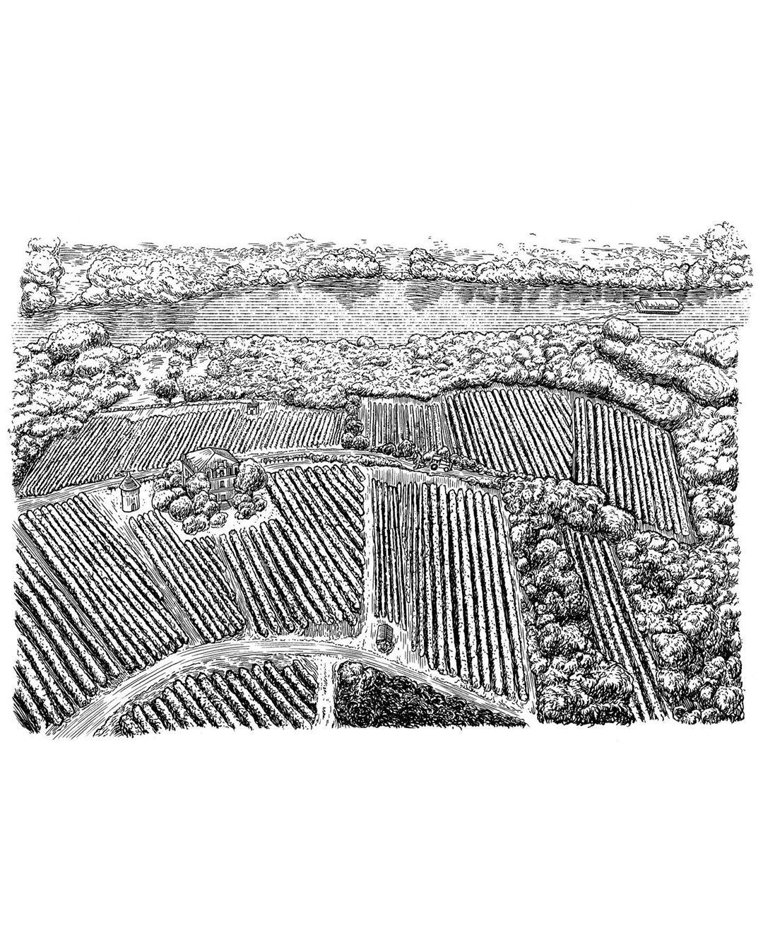 Vins Rotschild